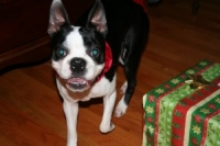 Macy On Christmas Morning!