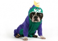 Boston Terrier In Dinosaur Costume - TOO CUTE!