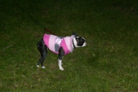 Boston Terrier Jacket