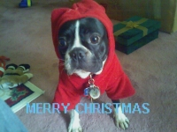 Boston Terrier Christmas hoodie