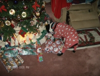 Boston terrier opening presents