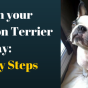 teach-boston-terrier-to-stay