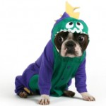 boston-terrier-in-costume
