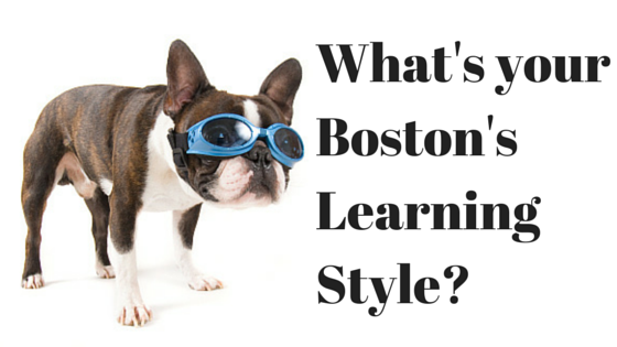 What's yourBoston Terrier'sLearning